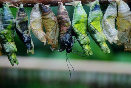 Wybieram życie motyla