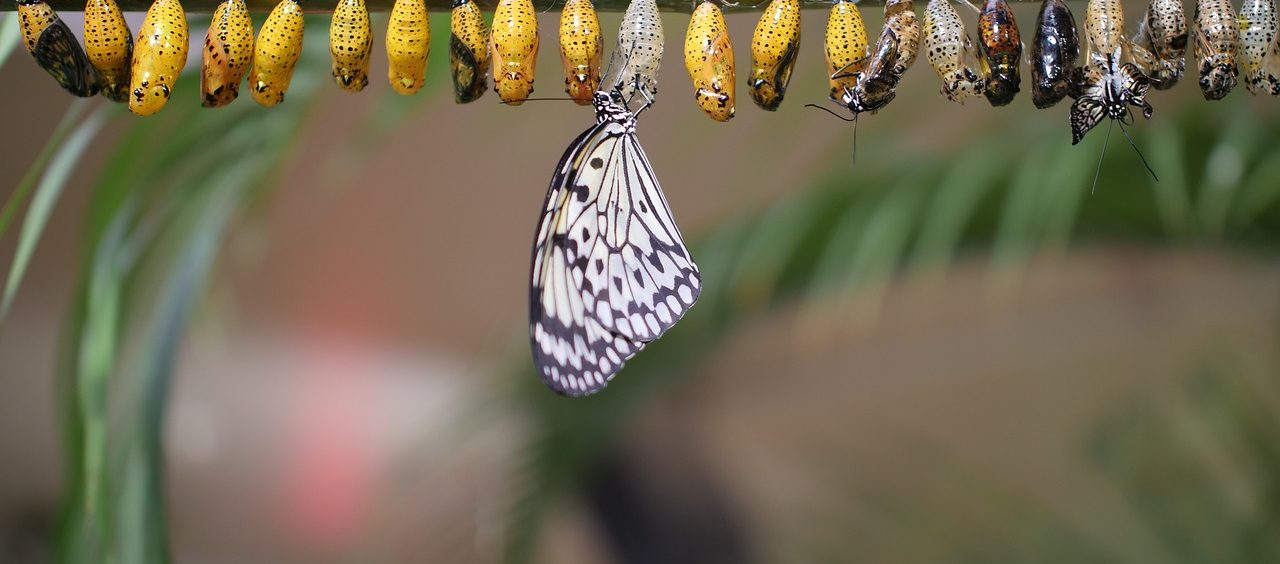 Lot motyla