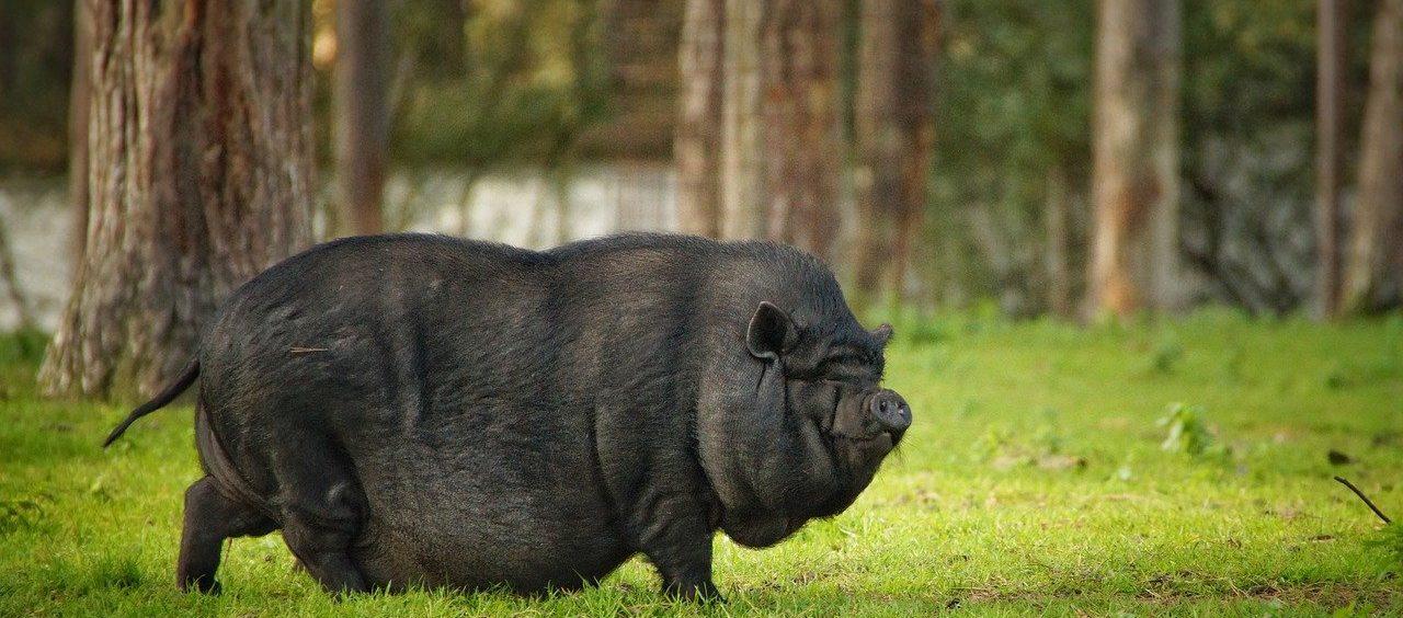 Kłamstwa, świnie i trufle