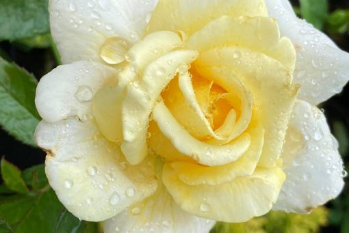 Romantyczność w kroplach deszczu